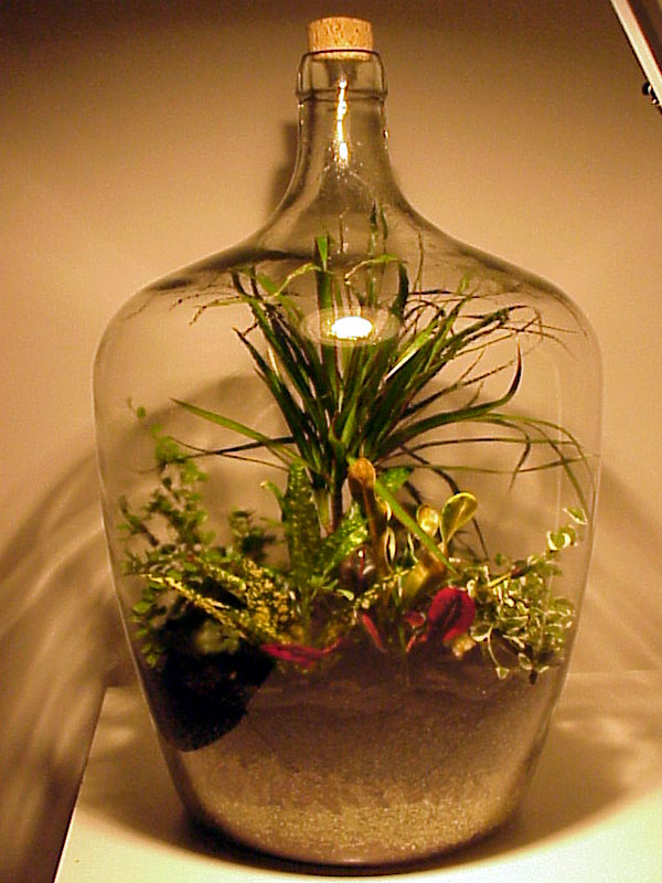 pop bottle terrarium bean plant experiment